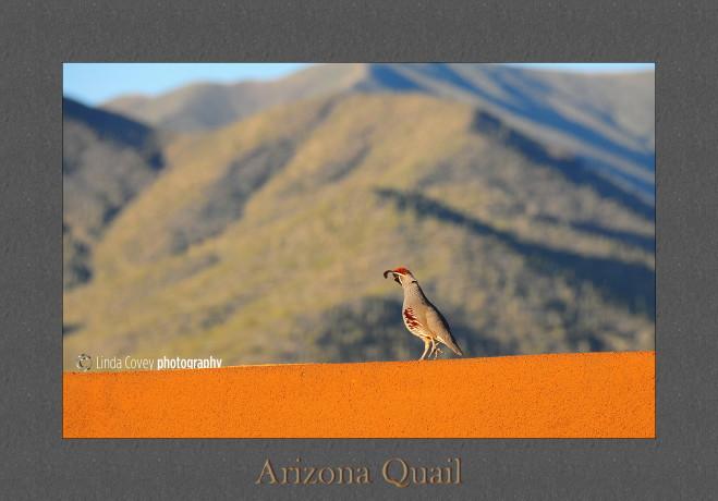 quail framed