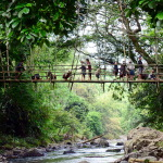 BAMBOO BRIDGE, INLAND BADUY