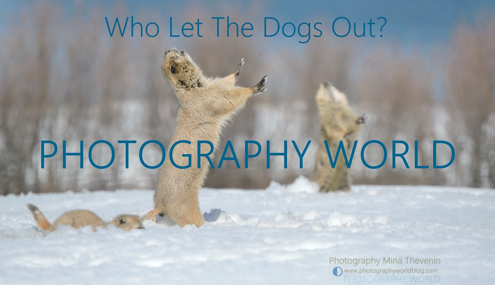 © Talking Prairie Dogs. photographyworld.org. Photograph by Mina Thevenin for PHOTOGRAPHY WORLD article: Black-Tailed Prairie Dog: Who Let the Dogs Out? @ https://photographyworld.org/animals/black-tailed-prairie-dog-who-let-the-dogs-out/