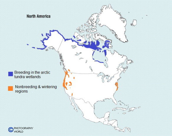 "Photography World Map North America Showing Tundra Swan breeding & non-breeding grounds for Photography World article, ""Aurora Borealis & Tundra Swans: Under the Northern Lights"" (photographyworld.org)"