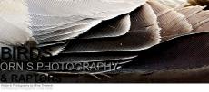 © Birds of Prey. Photograph by Mina Thevenin