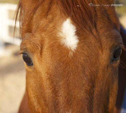 © Horse Eyes. Photograph Linda Covey