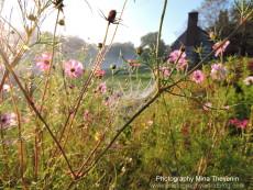 © Historic Locust Grove, KY. Photograph by Mina Thevenin