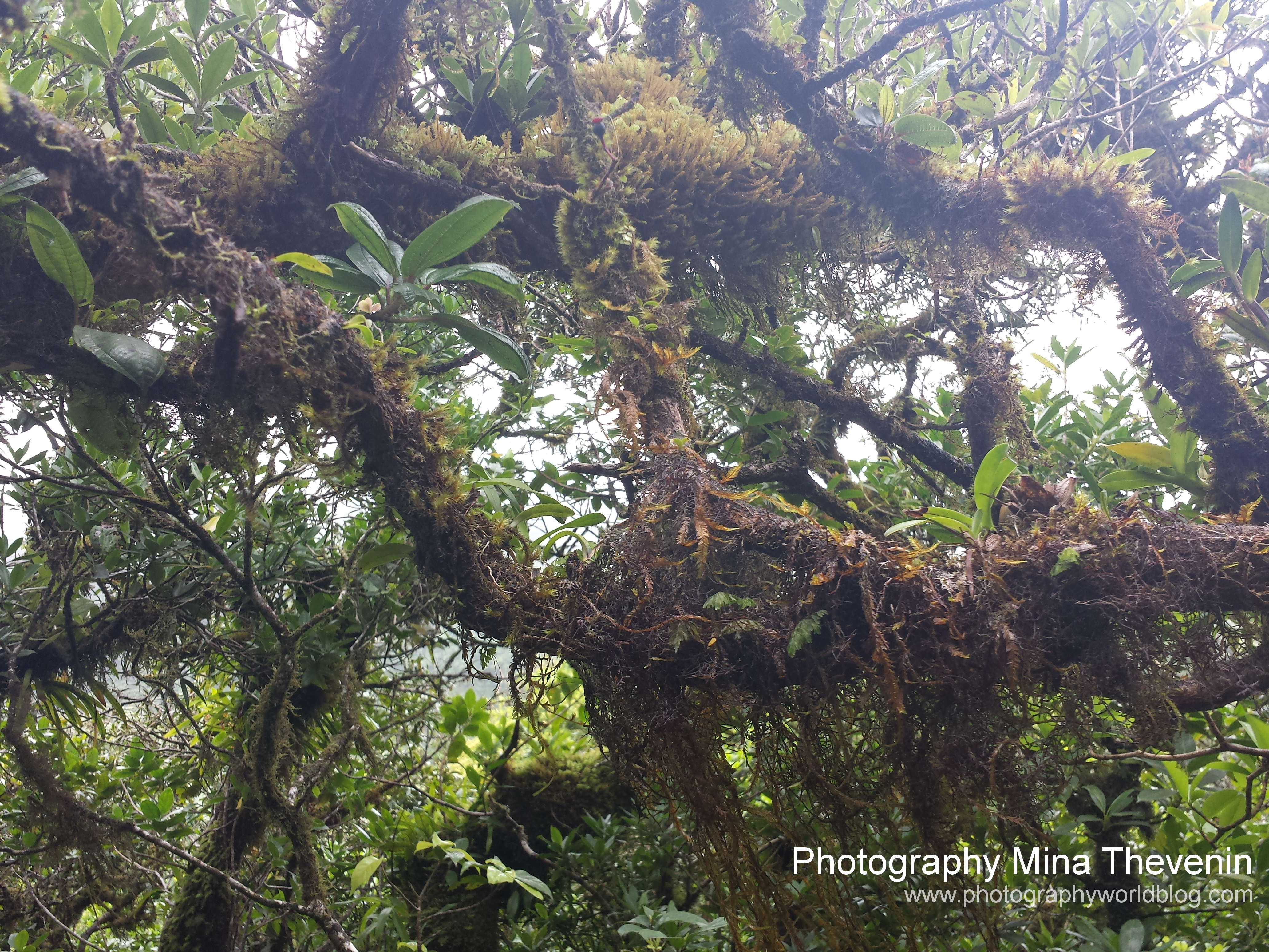 © Rainforest Mt Liamuiga. Photographer Mina Thevenin. Photography World. www.photographyworld.org