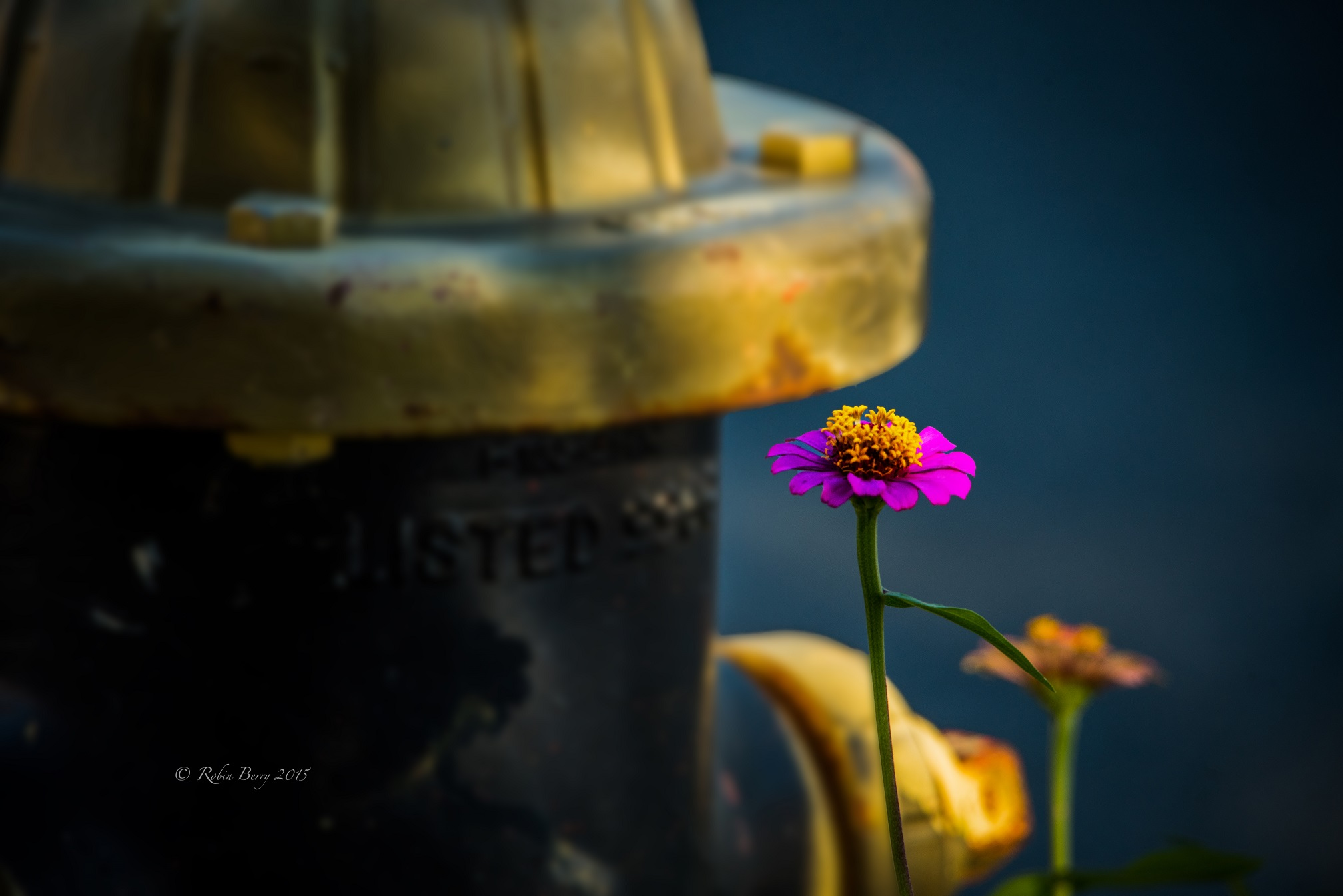 © Fire Hydrant & Flower. Photograph by Robin Berry