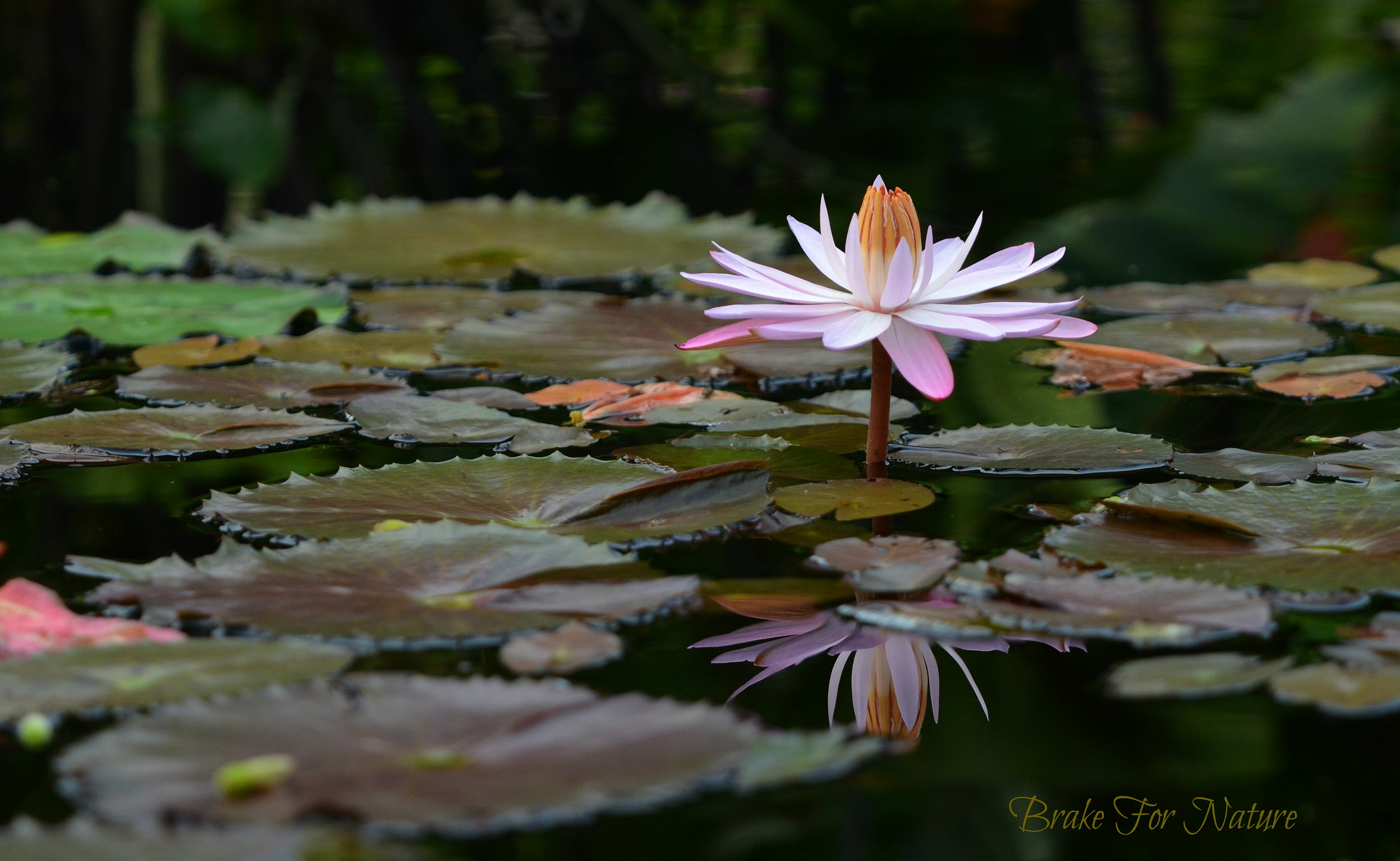 Compromising positions photographing the flower photography world pink light by cover photographer barbara hoeldt photography world photographyworld izmirmasajfo Gallery