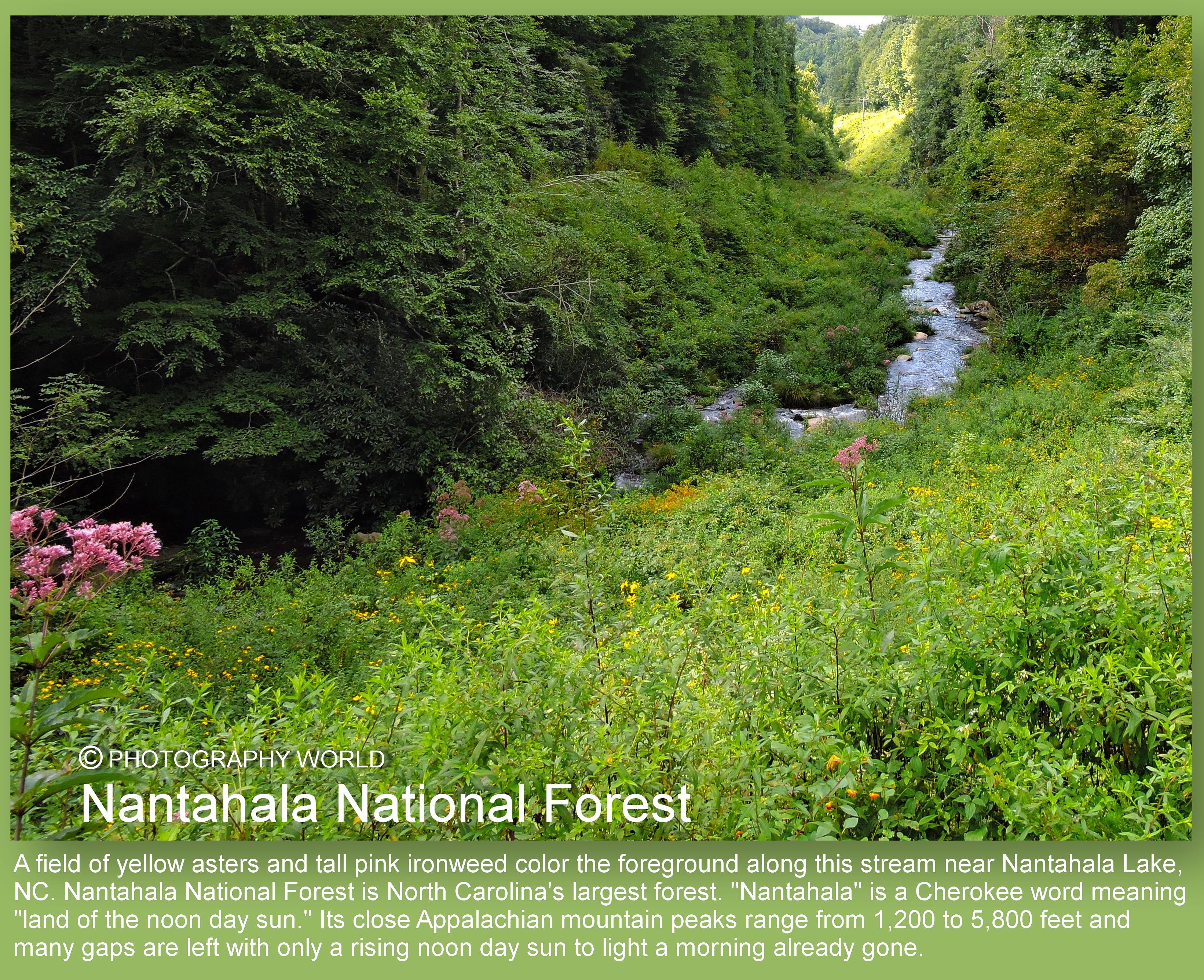 "© Nantahala National Forest text for PHOTOGRAPHY WORLD. Photograph by Mina Thevenin. Photography World article: ""APPALACHIAN TRAIL|Take a Walk on the Wild Side|Nantahala|Tellico Gap to Wayah Bald"" photographyworld.org"