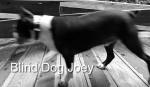 "© Blind Dog Joey. Photography World article: ""APPALACHIAN TRAIL|Take a Walk on the Wild Side|Nantahala|Tellico Gap to Wayah Bald"" photographyworld.org"