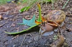 "© Appalachian Trail Snail. Photograph by Mina Thevenin. Photography World article: ""APPALACHIAN TRAIL|Take a Walk on the Wild Side|Nantahala|Tellico Gap to Wayah Bald"" photographyworld.org"