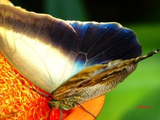 "© Butterfly Eating by Photographer Nelin Reisman. A PHOTOGRAPHY WORLD article, ""NELIN REISMAN- New York Photographer & Artist"""