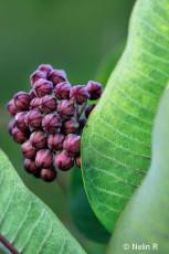 "© Purple Wildflower Buds. Photograph by Nelin Reisman. A PHOTOGRAPHY WORLD article, ""NELIN REISMAN- New York Photographer & Artist"""