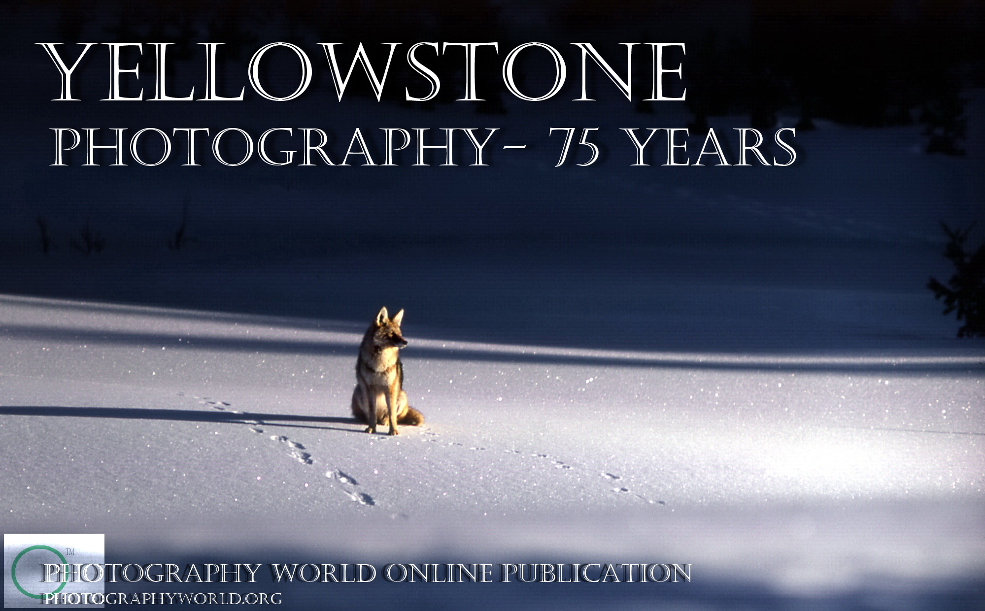 Coyote by NPS Photographer JR Douglass. Yellowstone 1968. Title Cover for PHOTOGRAPHY WORLD article, YELLOWSTONE Photography- 50 Years