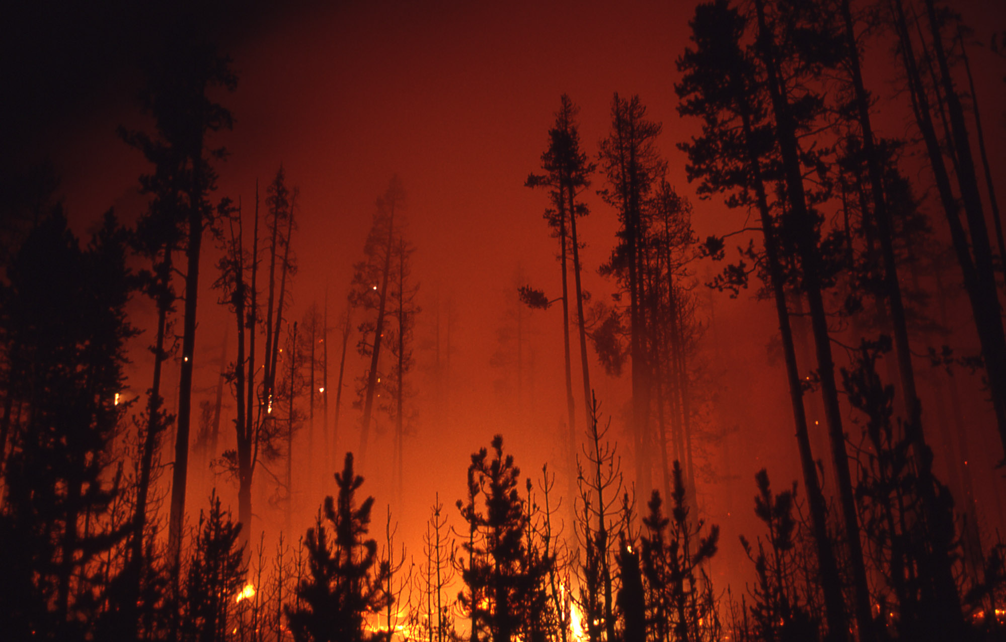 Nighttime glow of ground fire in lodgepole forest near Firehole; Jeff Henry; 1988