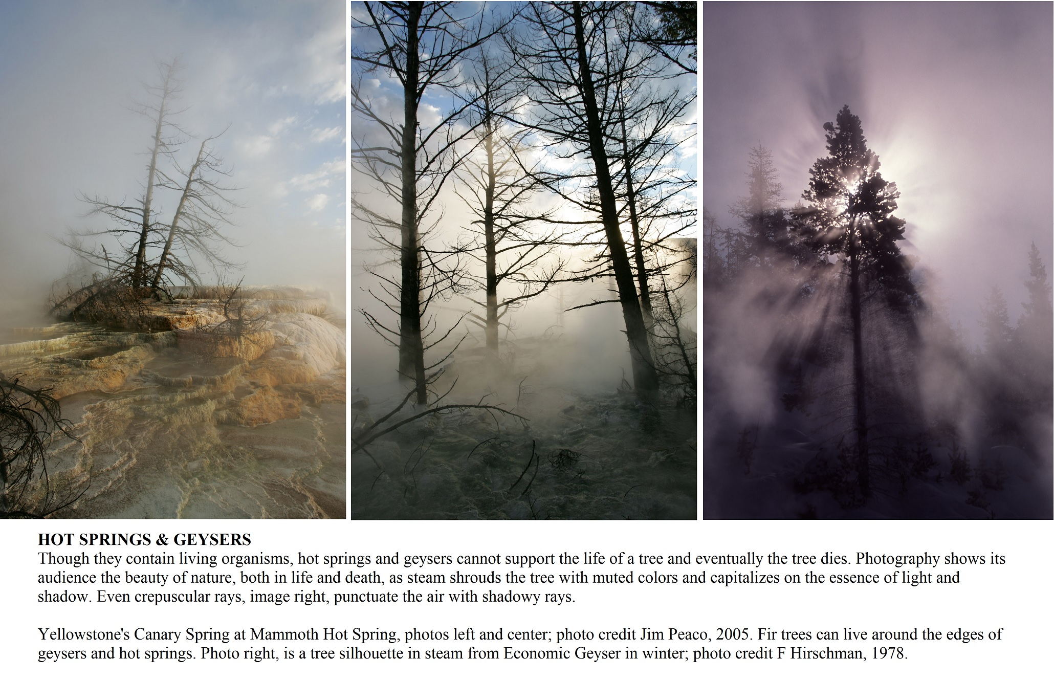 Hot Spring and Geyser trees. Three photos for article Yellowstone- Photography 75 Years. By Mina Thevenin @ photographyworld.org