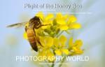 PLIGHT OF THE HONEY BEE @ https://photographyworld.org/animals/