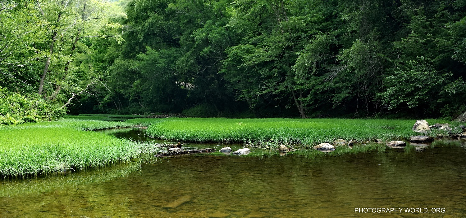 Greens of Big South Fork. A Copyright image by Mina Thevenin for photographyworld.org @ https://photographyworld.org/nature/whitewater-canoeing/