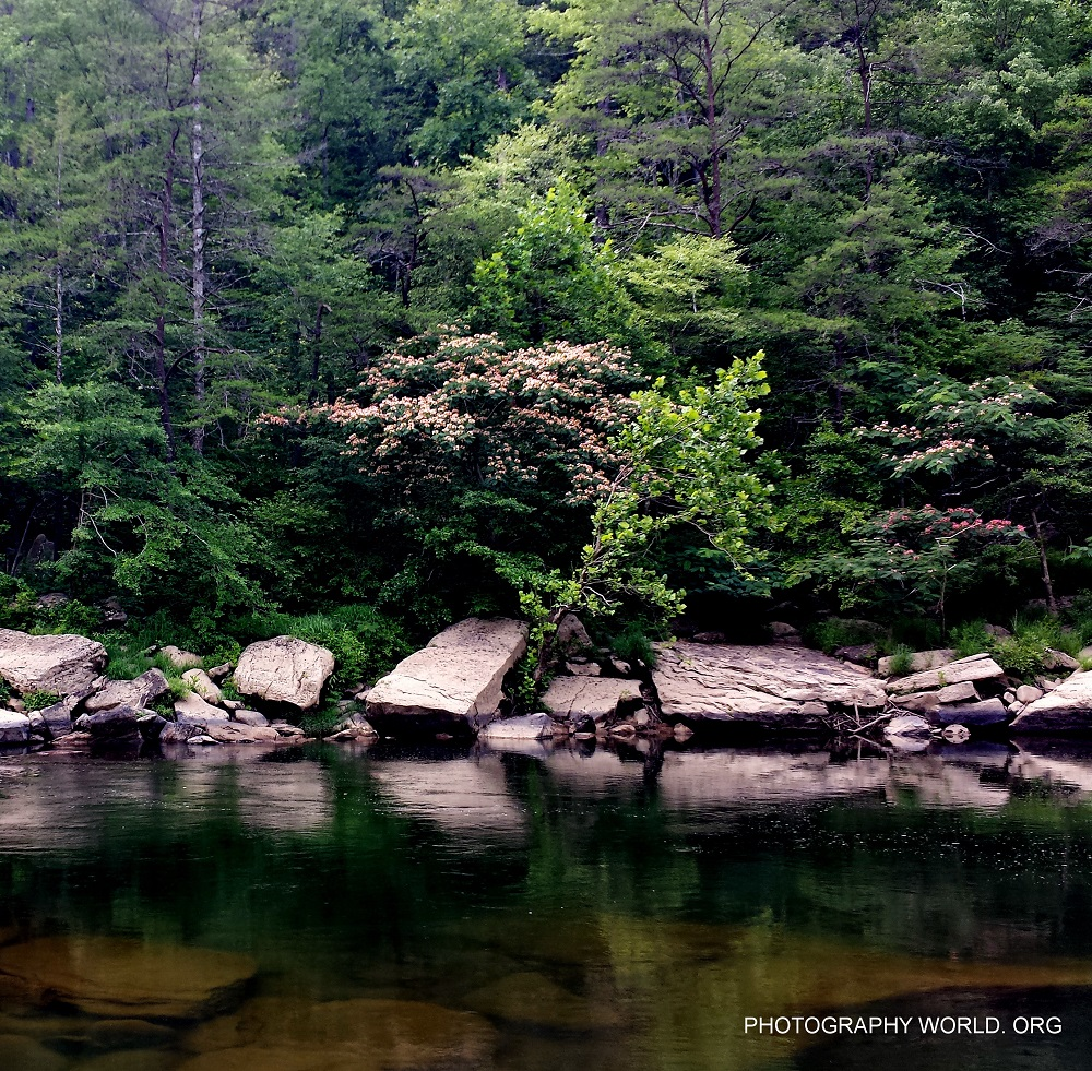 © Mimosa on the Big South Fork. Photographer Mina Thevenin @ https://photographyworld.org/nature/whitewater-canoeing/