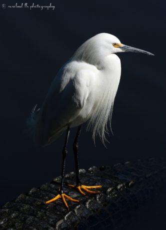Photographer Linda Sarmento @ https://photographyworld.org/animals/