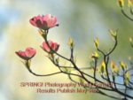 Spring! 2015 Results Publish May 9 for Photography World Contest @ https://photographyworld.org/contests/