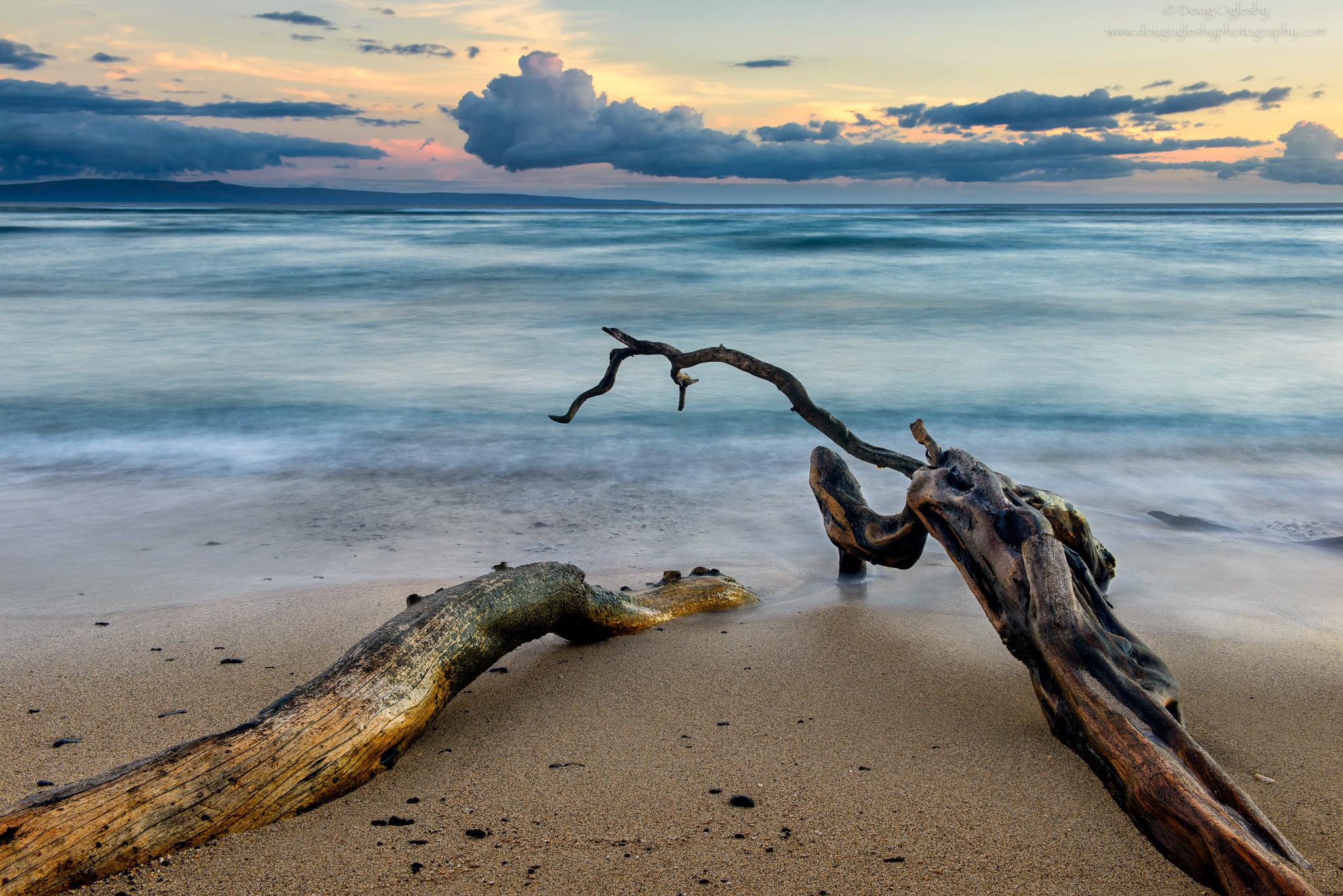 Kiawe Tree on Mau'i by Photographer Doug Oglesby @ https://photographyworld.org/nature/early-hawaii-history/
